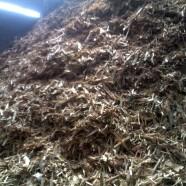Biomassa de madeira